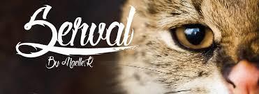 serval-fonts